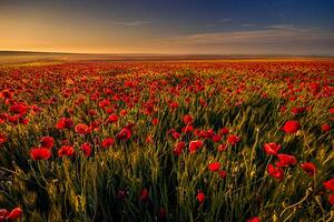 poppy-field-web